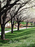 April 5, 2007 – BYU walkway