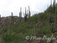 August 3, 2007 – cactus