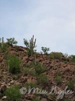 August 4, 2007 – more cactus