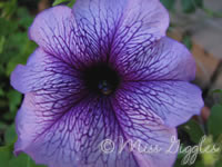 August 26, 2007 – purple flower