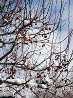December 9, 2007 – snowy tree