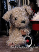 February 17, 2007 – stuffed dog