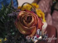 July 27, 2007 – birthday rose