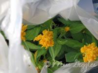 June 9, 2007 – new flowers