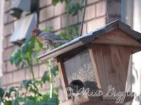 June 24, 2007 – birds