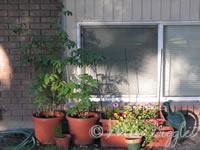 June 25, 2007 – pot garden