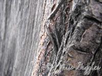March 5, 2007 – tree bark