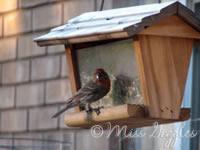 May 28, 2007 – feed the birds