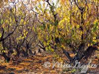 November 1, 2007 – orchard