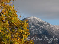 October 18, 2007 – mountain & tree
