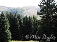 September 13, 2007 – mountain trees